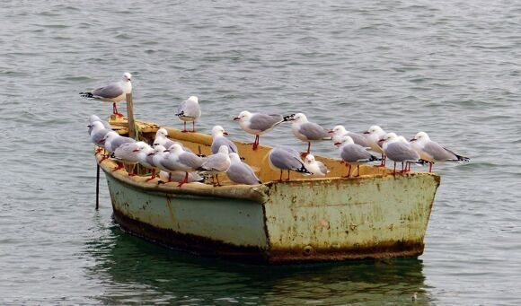 seagulls-3890144_1280